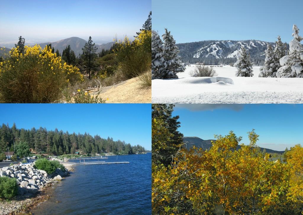 4 seasons photo collage