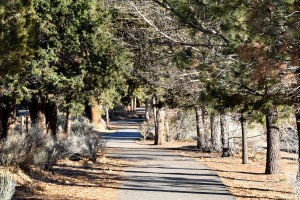 Alpine Pedal Path in Big Bear
