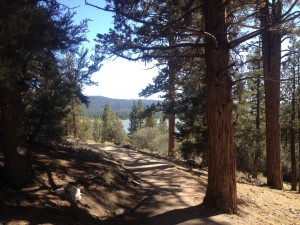 The Ultimate Ultra Marathon- Kodiak 100 in Big Bear Lake