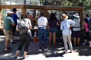 Learn about helping animals and the environment at the Big Bear Alpine Zoo