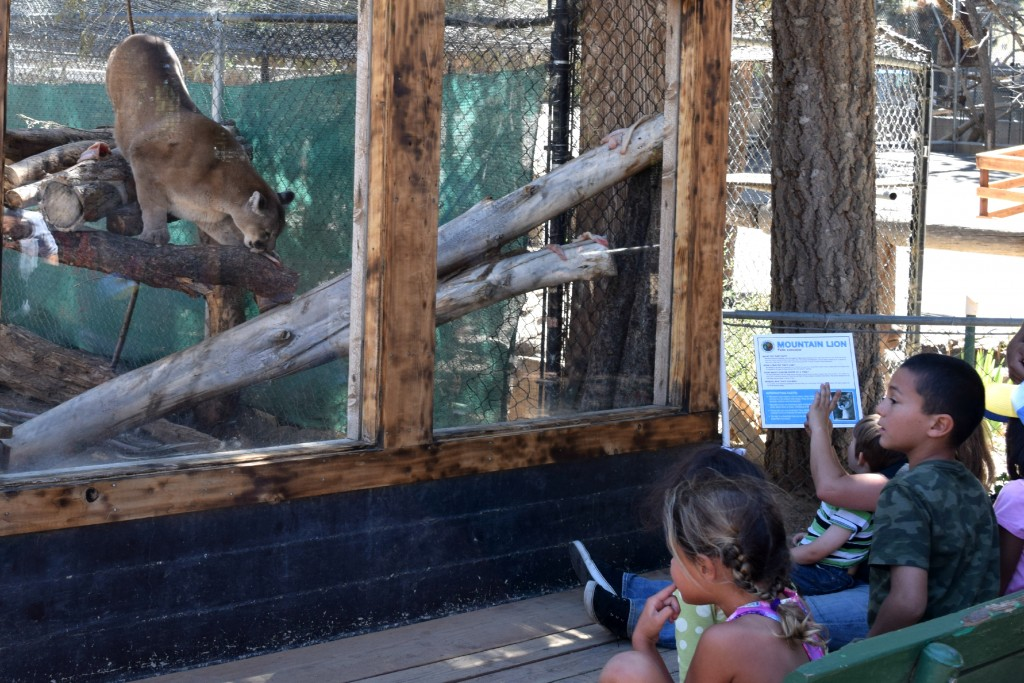 Kids learning about cougars at the Big Bear Zoo