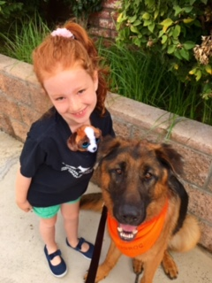 German Shepherd Rescue Adoption