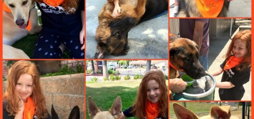 German Shepherd Adoptions at Petco